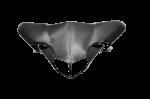 Carbonin - Carbonin Carbon Fiber Single Tail OEM 07-13 Ducati 848/1098/1198
